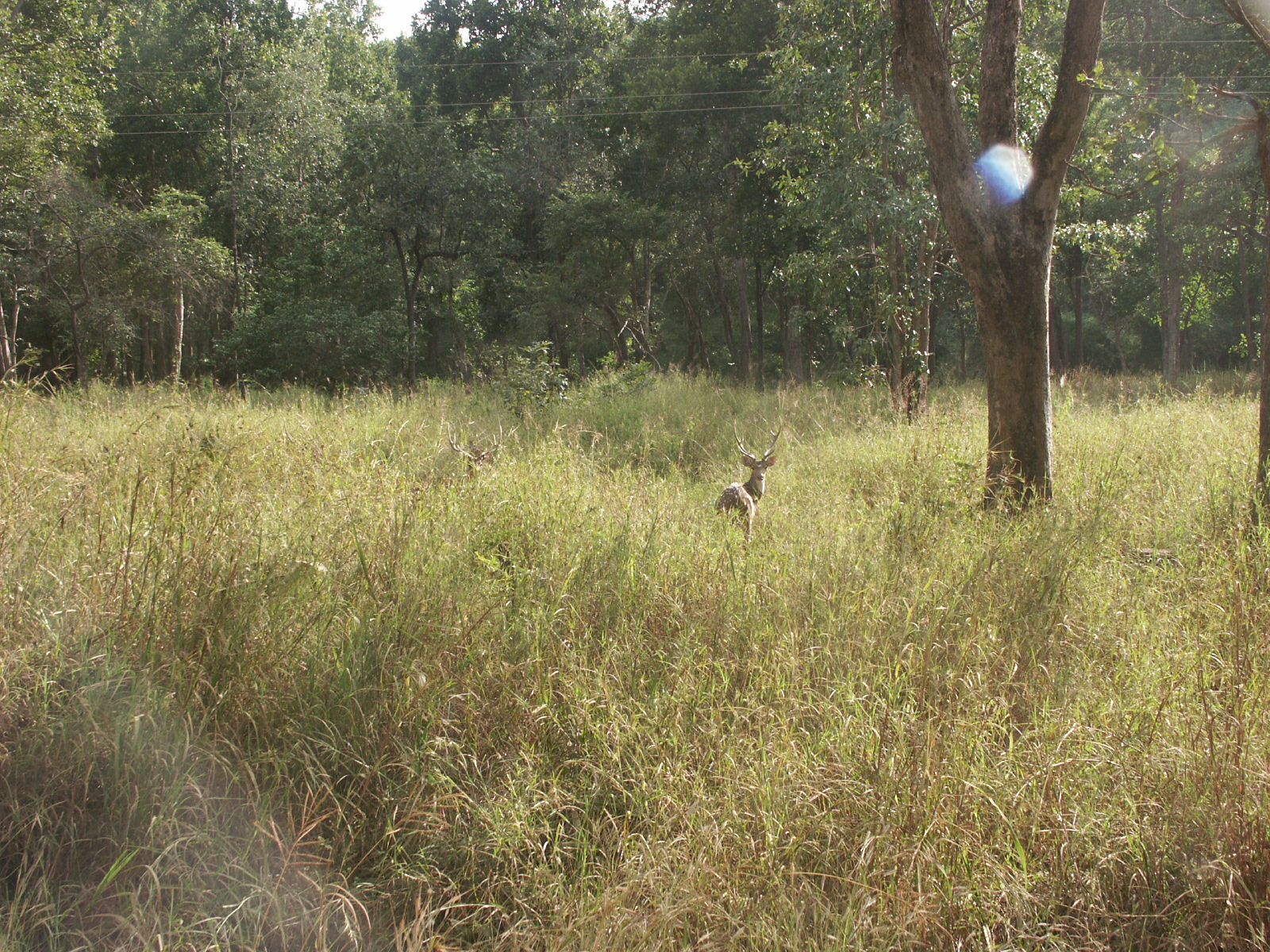 Picture Gallery of Kanha National park