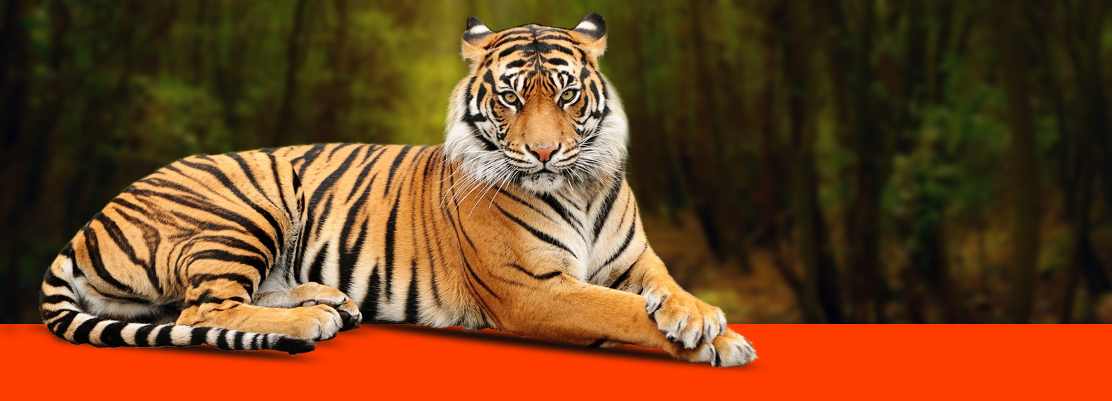 tiger identification,identification of tigers,wildlife sanctuary