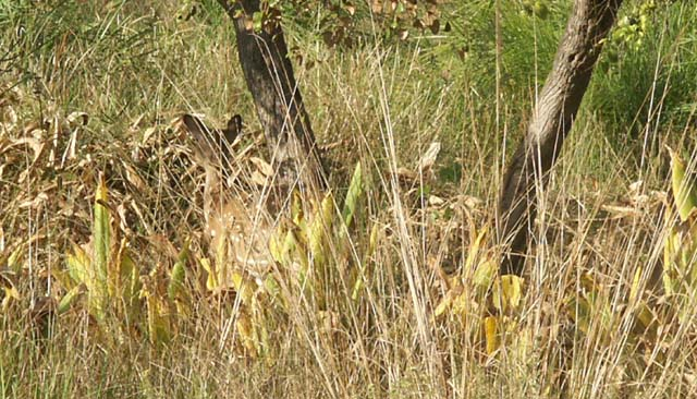 Tigers of India Picture Gallery of Kanha National Park