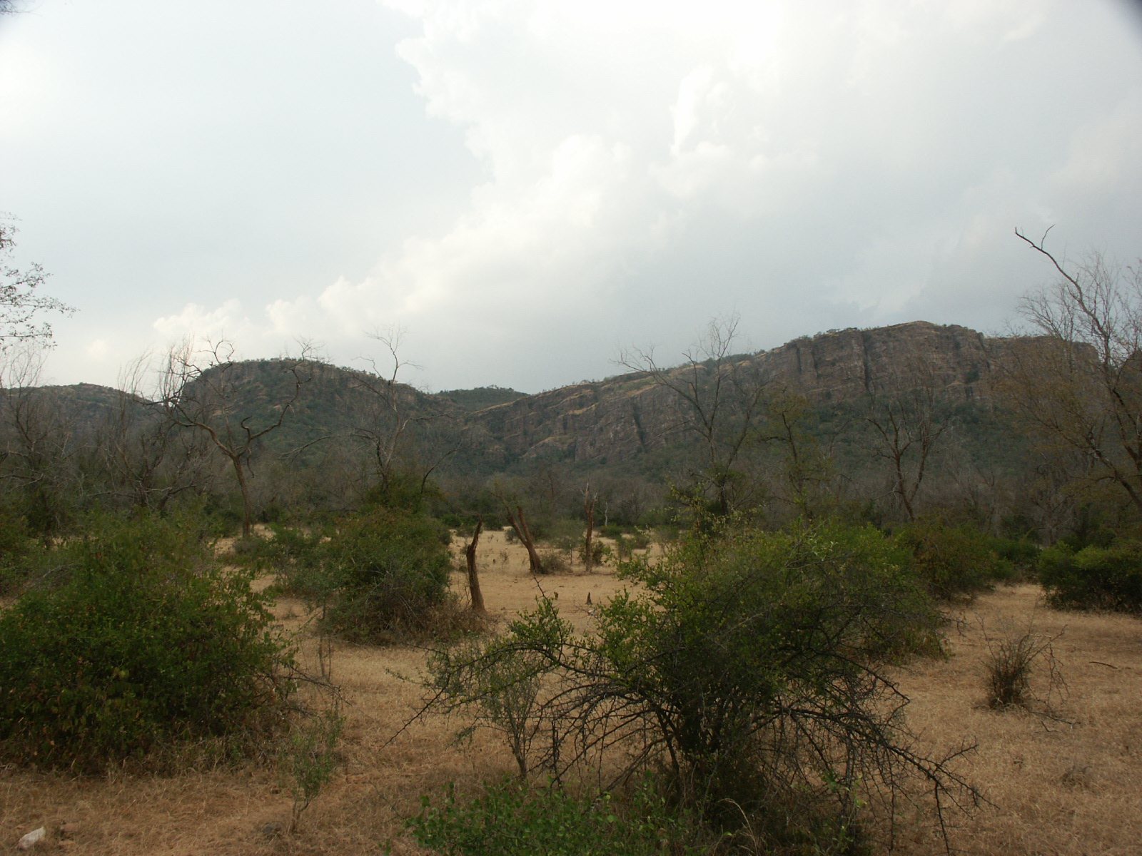 Picture Gallery of indian national parks ranthambhore jungle